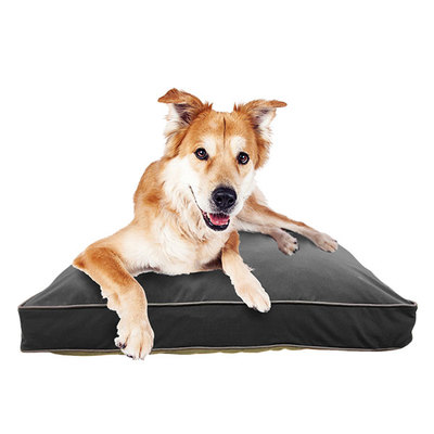 Doggybo Midi(ドギボー ミディ)ダークグレー